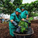 Arborização: Sudes atende mais de duas mil solicitações