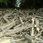 Condomínio e padaria são multados por crime ambiental em Maceió