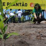 Prefeitura inicia plantio de 2 mil mudas de árvores em parceria com construtora