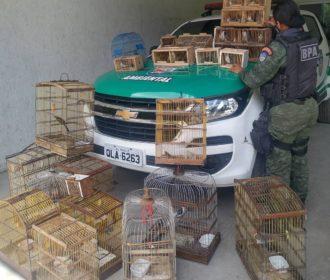 Polícia realiza operação e apreende mais de 100 pássaros em feira
