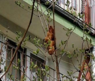 """""""Animal misterioso"""" que assustou moradores da Polônia na verdade era um croissant"""