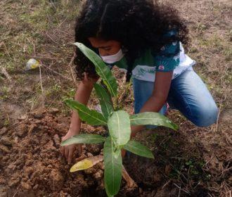 Ação ecológica: 100 mudas de árvore foram plantadas em Murici
