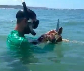 Vídeo: Tartarugas marinhas são resgatadas de redes de pesca em Maceió