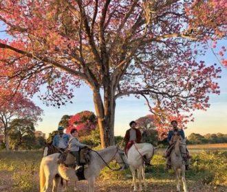 Autor de 'Pantanal', Bruno Luperi visita locações da novela e compartilha fotos inéditas